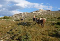 best-pack-trip-service-bighorn-mountains-wyoming